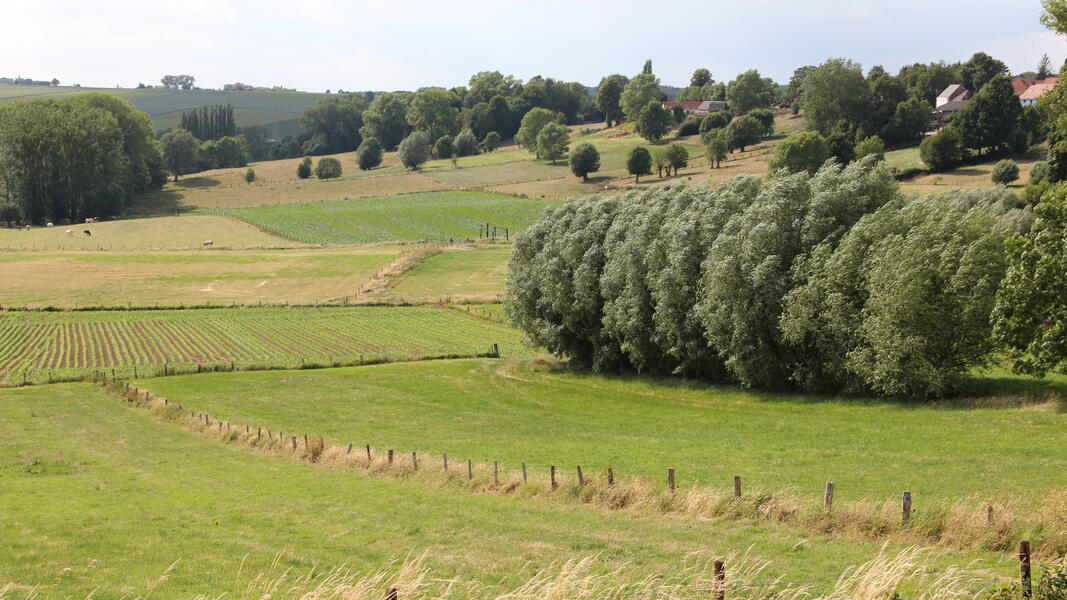 Heerlijk kamperen in hartje Vlaamse Ardennen #2