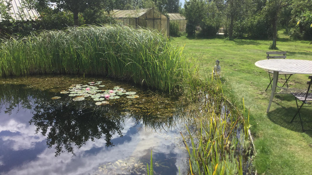 Mini campsite with swimming pond and fire places on the estate. With 2 ha of walking area. #7