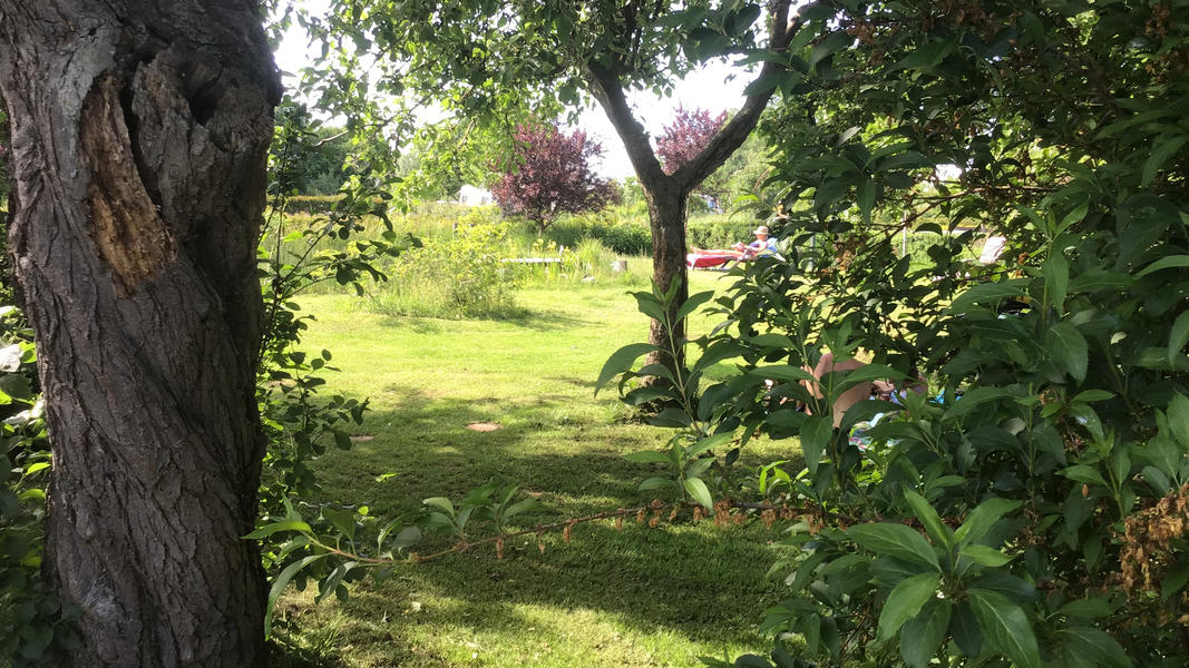 Mini campsite with swimming pond and fire places on the estate. With 2 ha of walking area. #32