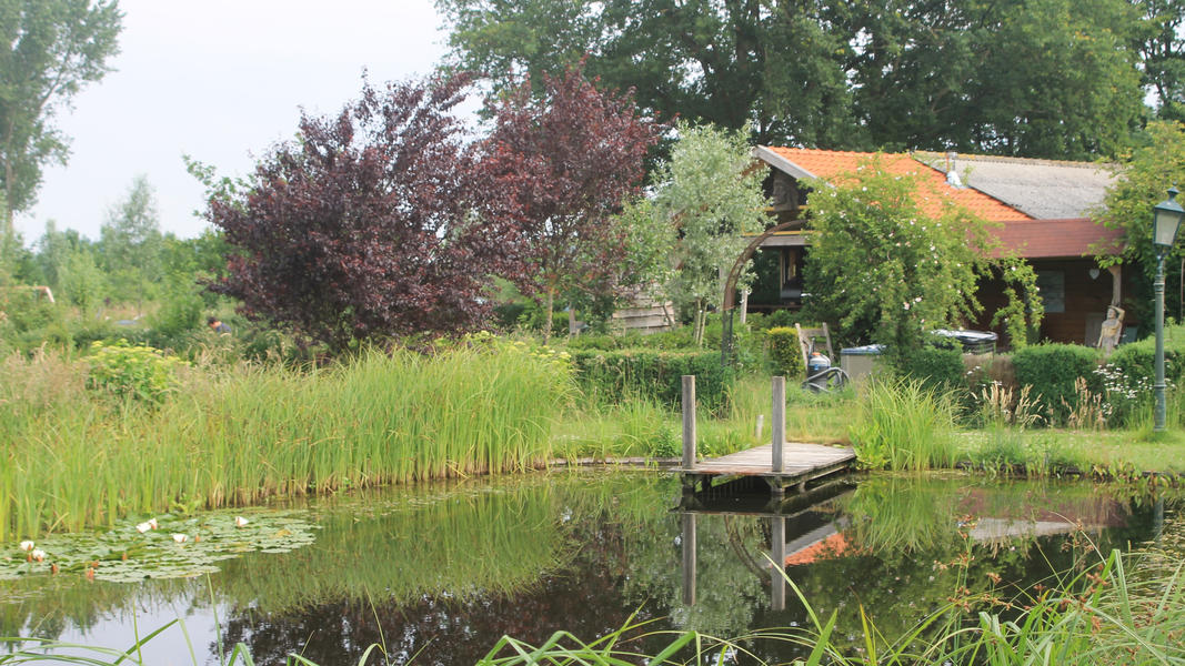 Mini campsite with swimming pond and fire places on the estate. With 2 ha of walking area. #53
