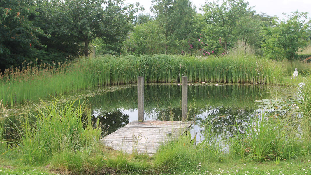 Mini campsite with swimming pond and fire places on the estate. With 2 ha of walking area. #56