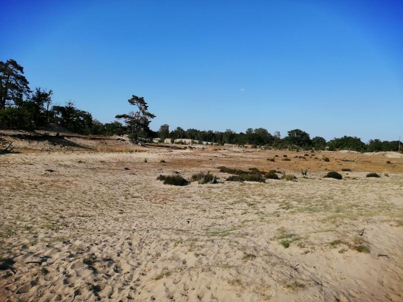 Off-grid - Ecobobo on the edge of the Loonse- en Drunense Duinen (DW) nature park #7