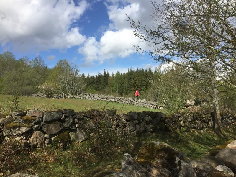 Tent pitch in the Swedish countryside near lakes and forests #6