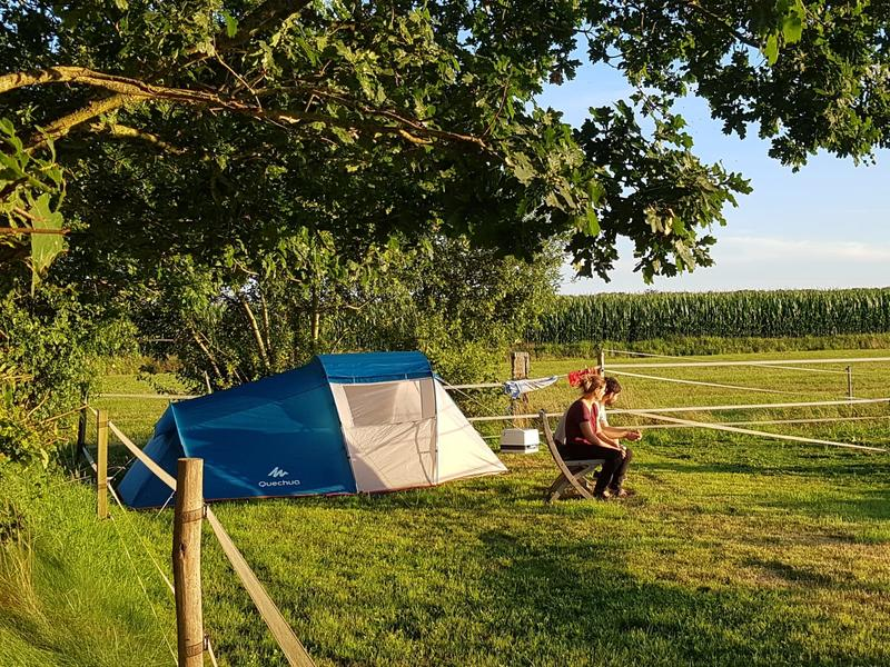 Camping among the animals and meadows in Drenthe #1