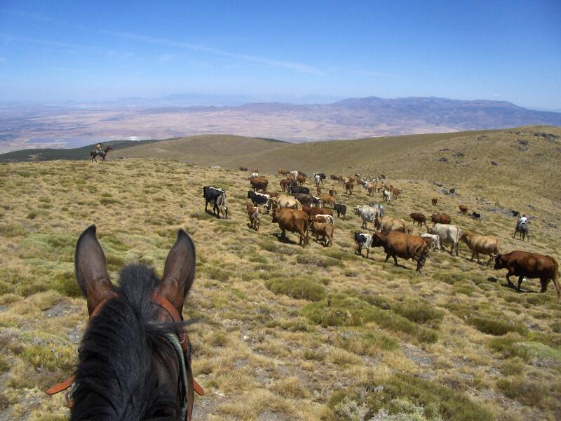 Only accessible with a mountain guide, an Andalusian cowboy. #1