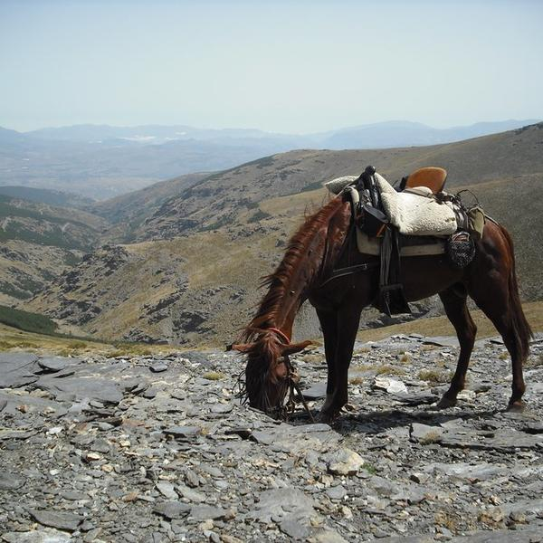 Only accessible with a mountain guide, an Andalusian cowboy. #3