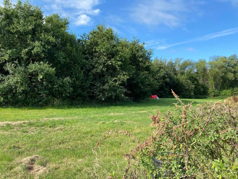 An estate with meadow, forest and fruit trees #2