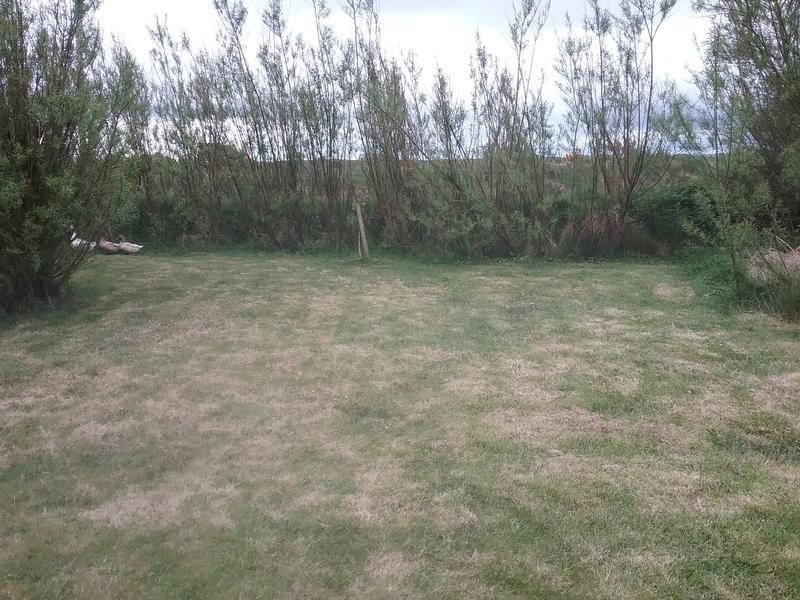 Steve's Front Garden #1