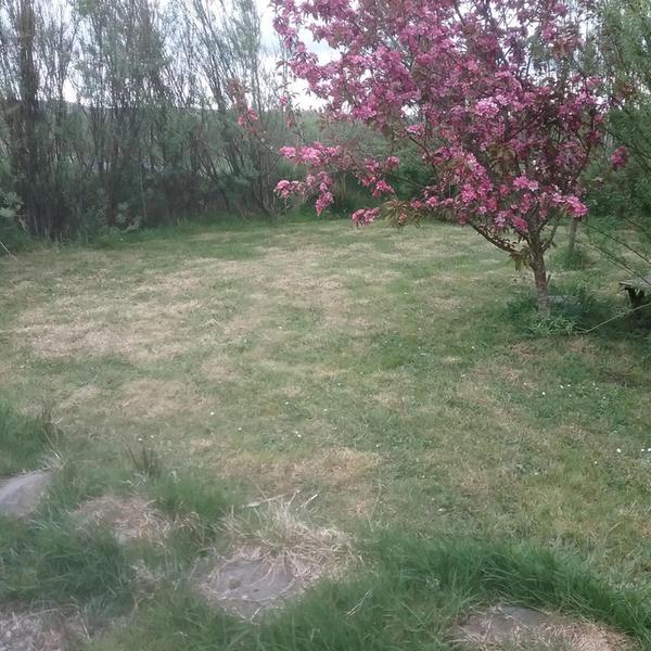 Steve's Front Garden #2