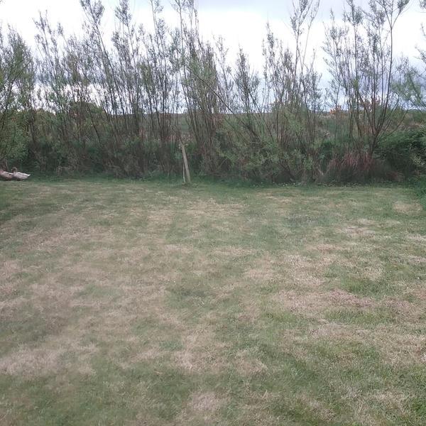 Steve's Front Garden #3