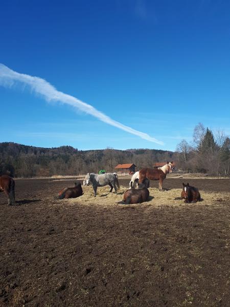 Camping at the horse farm #4