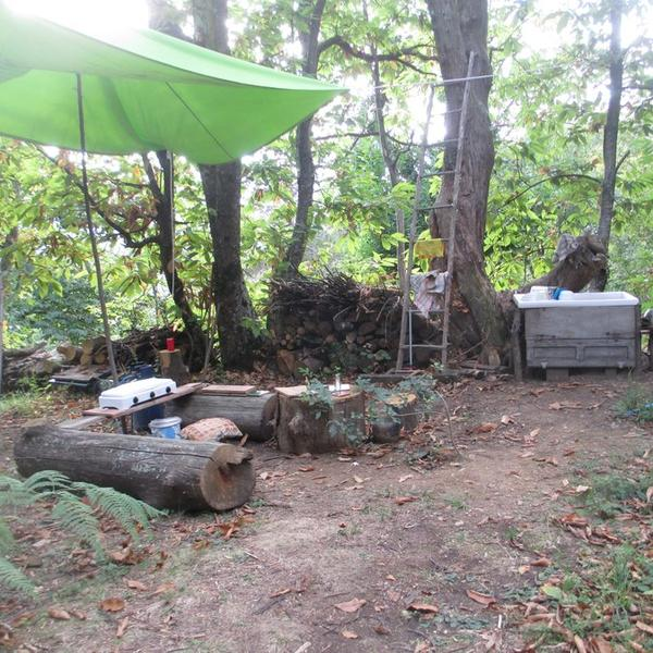 Sillico Campspace, Wild camping Paladini in the Tuscan Apennines #3