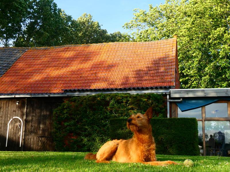 Camper spot on a quiet yard in the polders of Zeeuws-Vlaanderen #10