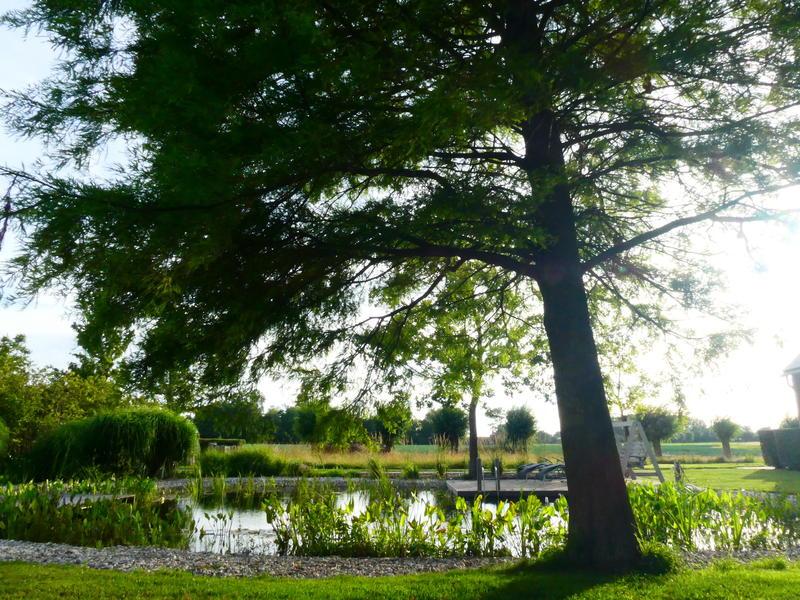 Camper spot on a quiet yard in the polders of Zeeuws-Vlaanderen #11