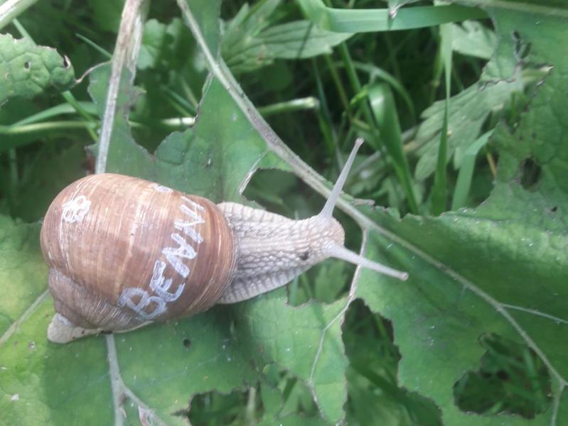 Prachtige ecologische tuin dicht bij Brugge #9
