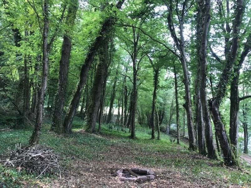 Primitive camping or bushcrafting in the French Ardennes #6