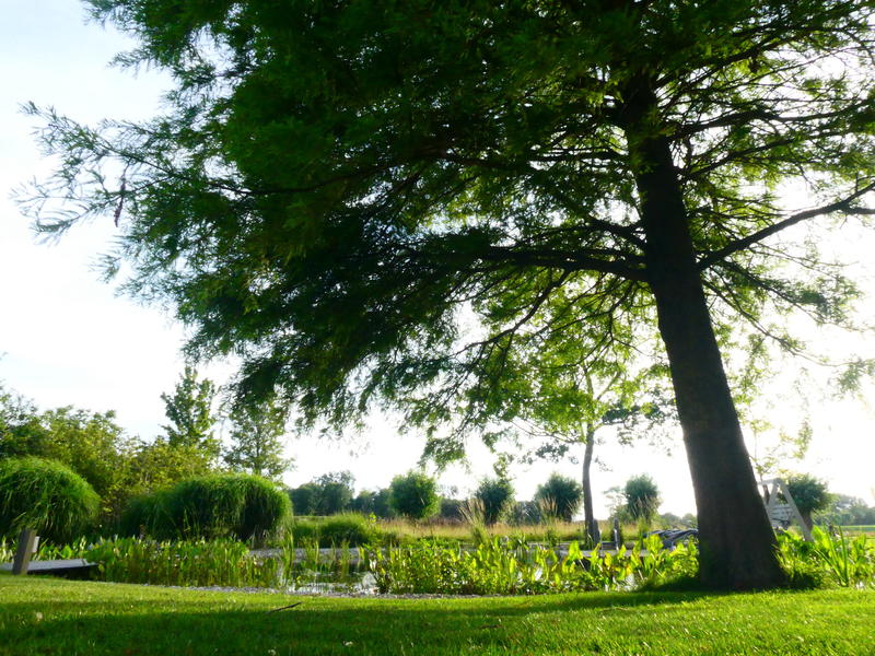Camper plek op rustig erf in de polders van Zeeuws-Vlaanderen #12