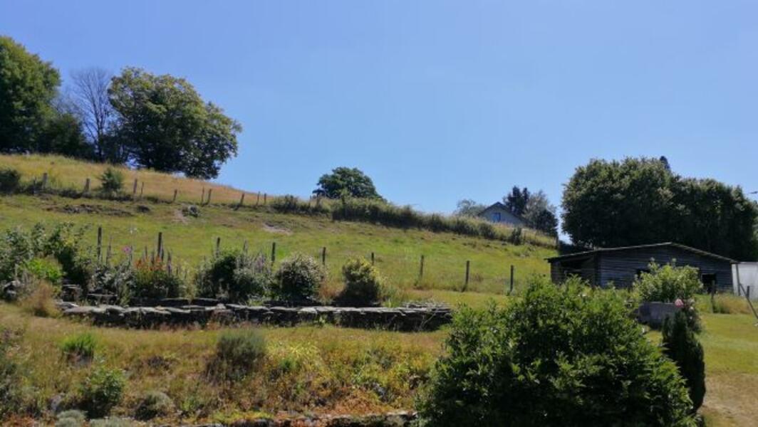 Meadow in the beautiful Semois Valley near Bouillon #1