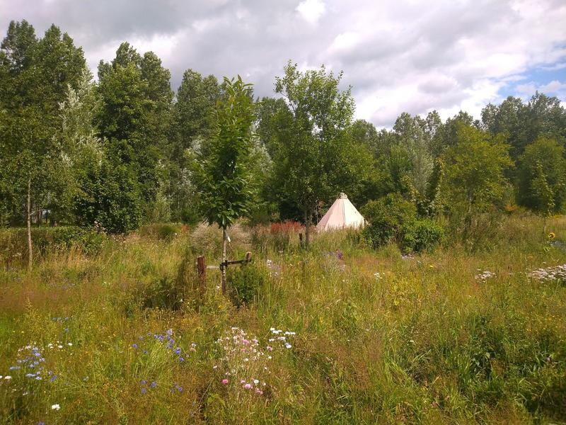 Knaus retro caravan in a natural garden #7