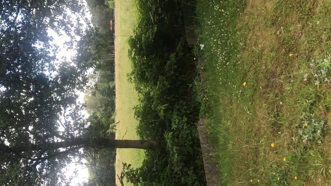 Leuke tuin in de Kempische natuur vlakbij Turnhout, Kasterlee en Herentals #1