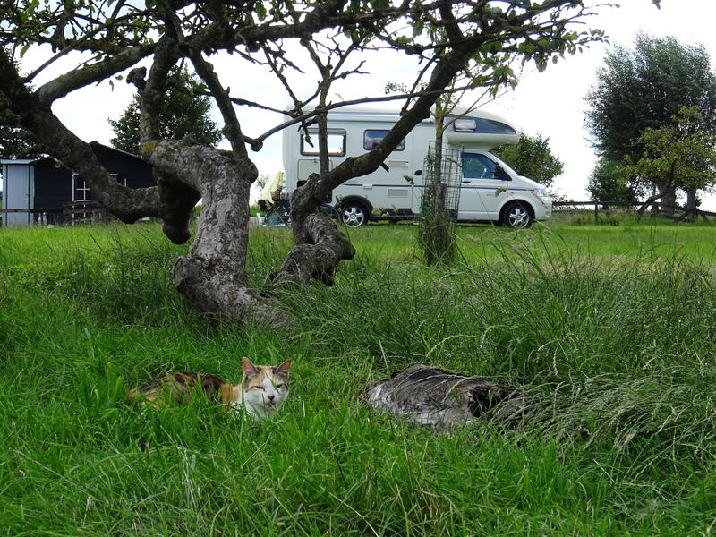 Idyllic camper place in the middle of the polder, with lots of peace and space #9