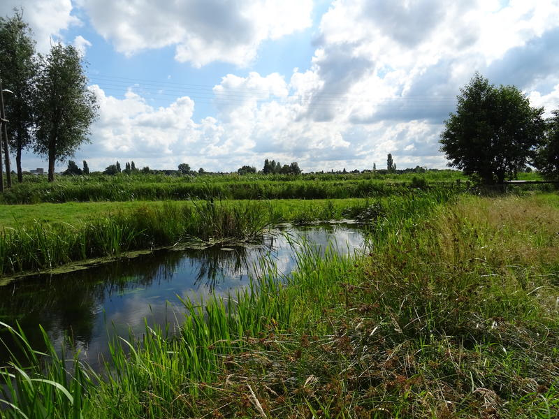 Idyllic camper place in the middle of the polder, with lots of peace and space #3