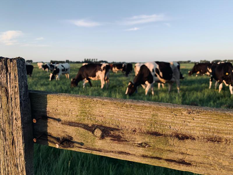 Kom tot rust op boerderij midden in de polder van de Alblasserwaard #13
