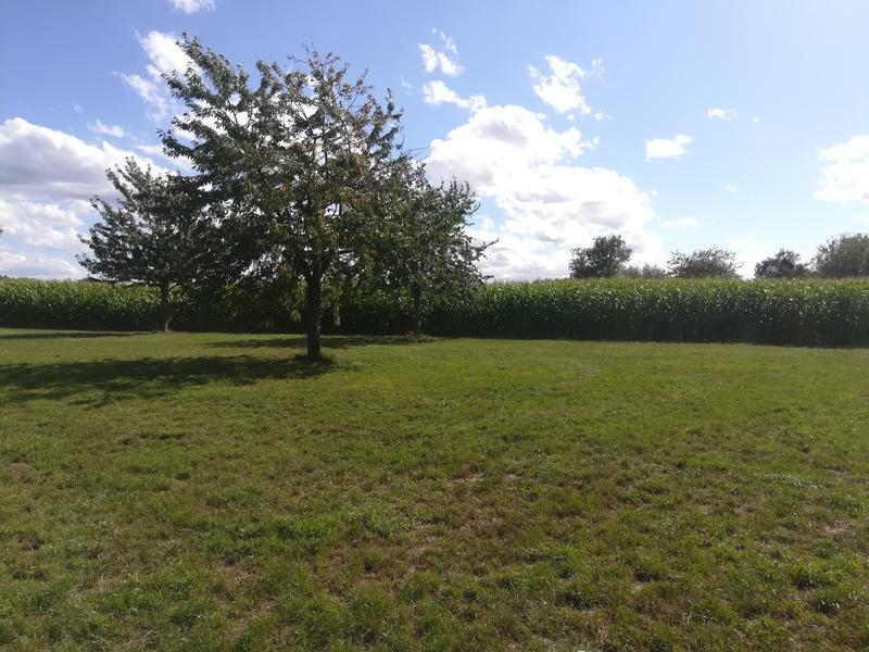 Idyllisches Zelten mitten auf den Feldern #3