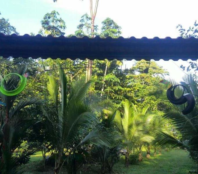 A naturalist garden near the tropical rain forest #2