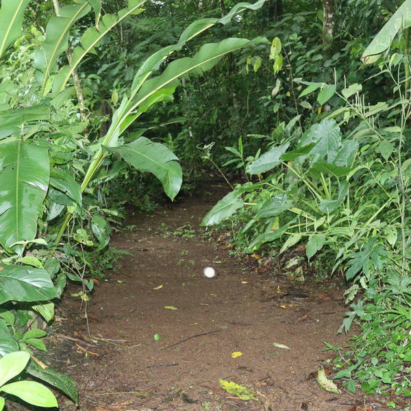 A naturalist garden near the tropical rain forest #5
