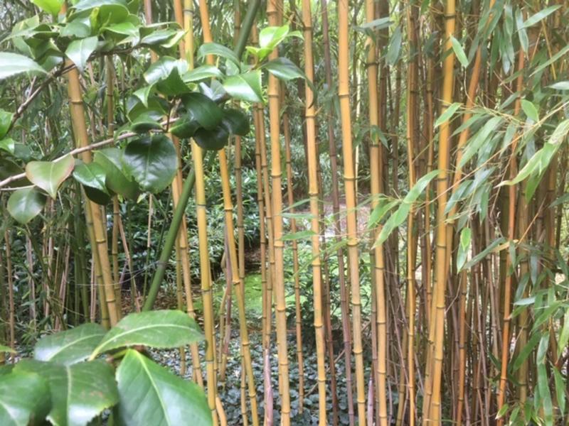 Costa Bamboa #7