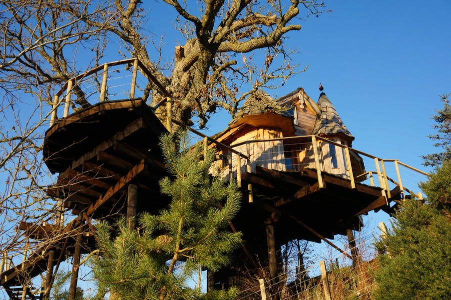 A real Tree House, a real craft masterpiece in an ancient Ash Tree with 360 degree views. #1