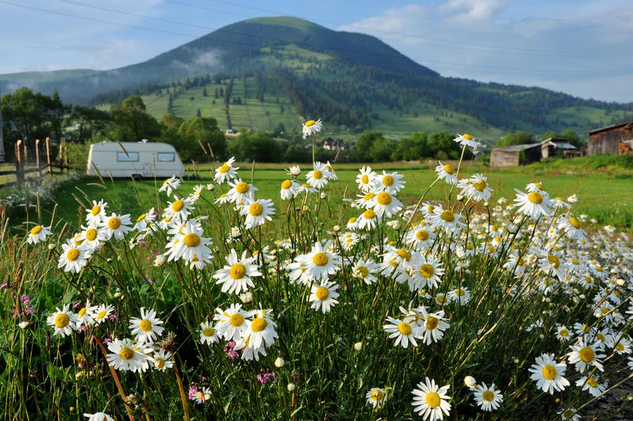 Rural Eco Camping in Bucovina with Mountain Views #1