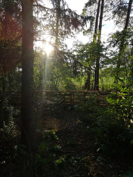 Cosy in the Woods #2