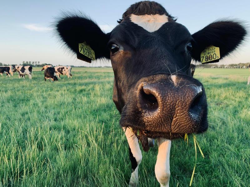 Kom tot rust op boerderij midden in de polder van de Alblasserwaard #2