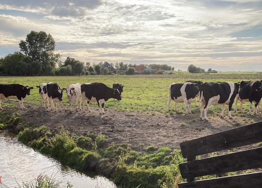 Microkamperen op zorgboerderij in de polder #4