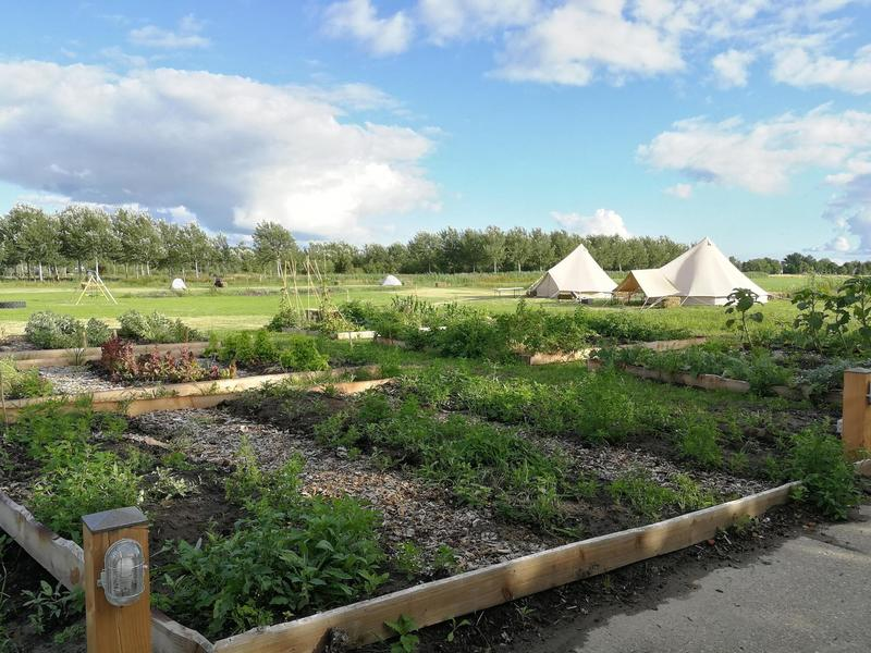 City farm on the outskirts of Sneek with horses, chickens and farm shop #7