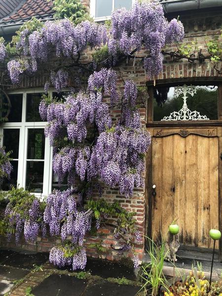 Prachtige ecologische tuin dicht bij Brugge #19