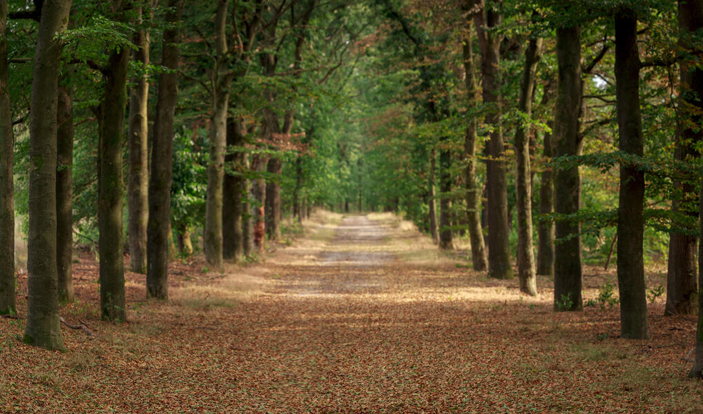 Camping in the woods at National Park 'de Hoge Veluwe' #2