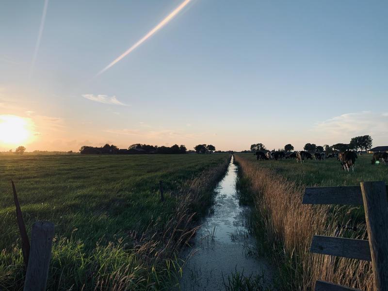 Kom tot rust op boerderij midden in de polder van de Alblasserwaard #9