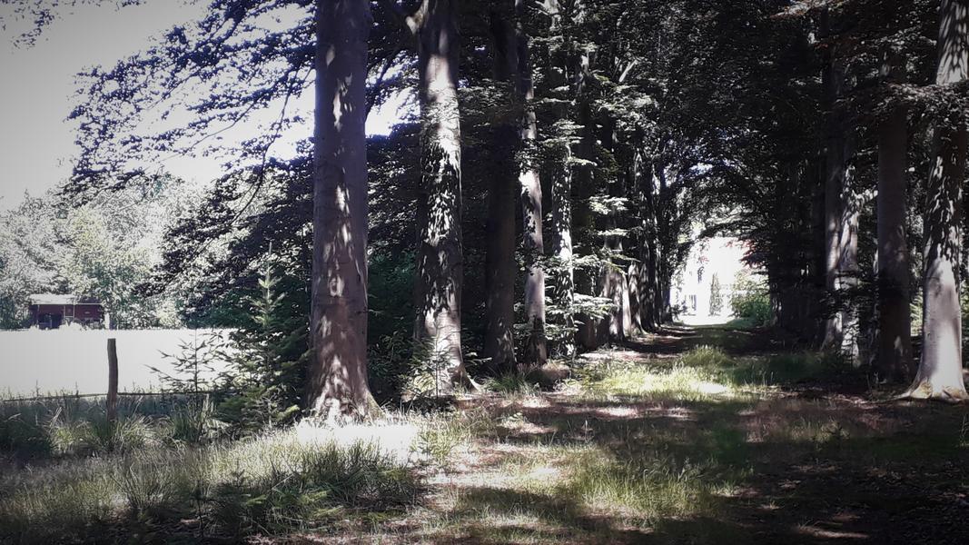 Camping at Grijsberg #3