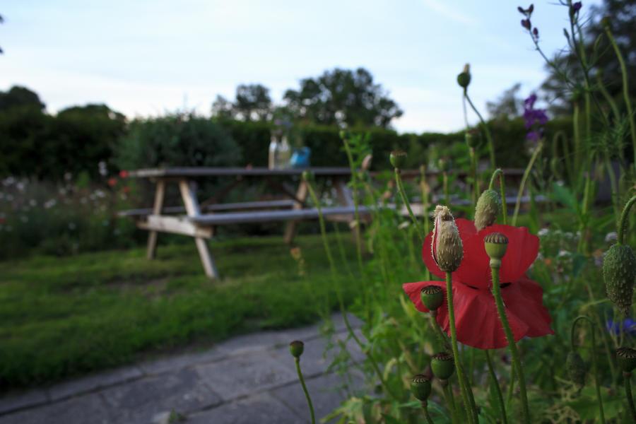 Farm micro camping near Borgerswold #4