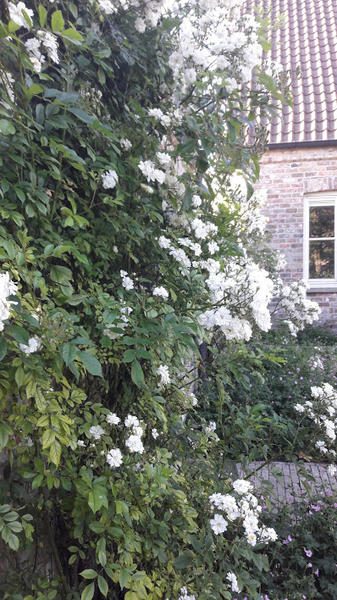 beautiful garden in a quiet village not far from Bruges; beautiful nature #10