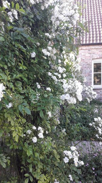 prachtige tuin in rustig dorp niet ver van Brugge; mooie natuur #10