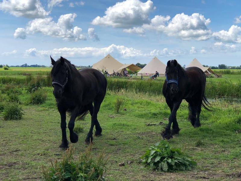 Kampeerplaats bij stadsboerderij met pluktuin, paarden en kippen bij Sneek #10