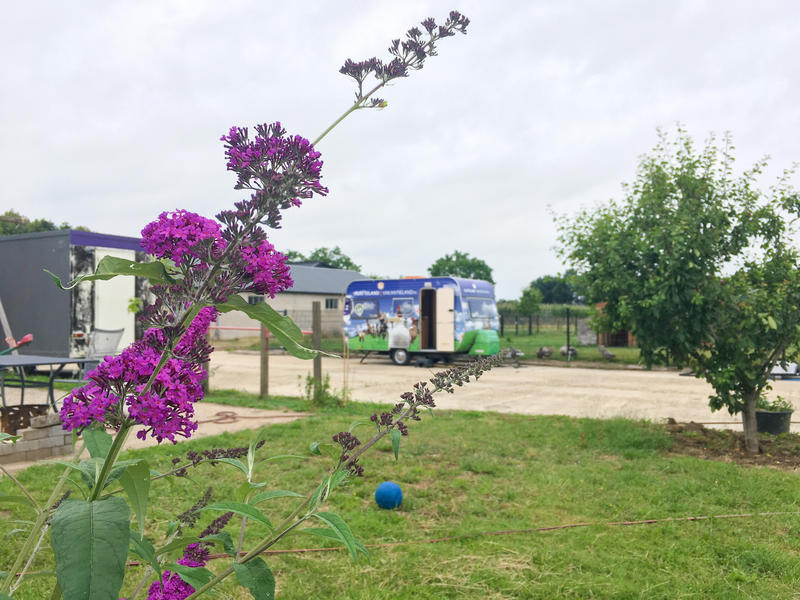 beautiful Betuwe On the strolling route vd waal, in an orchard caravan with its own sanitary facilities #1