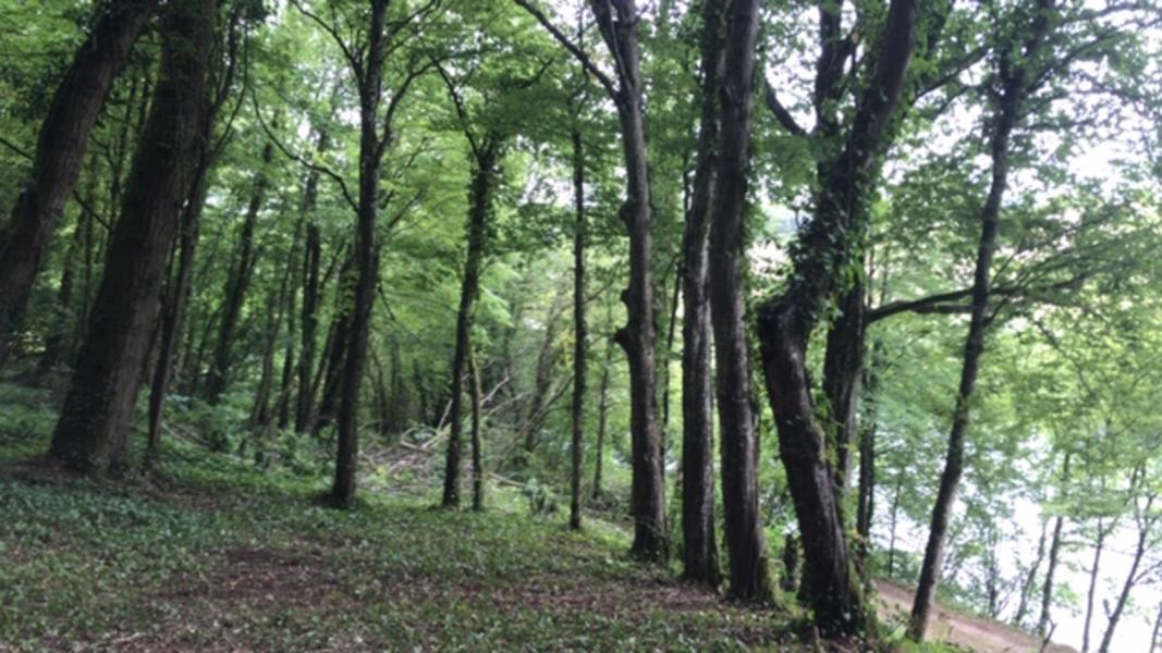 Primitive camping or bushcrafting in the French Ardennes #3