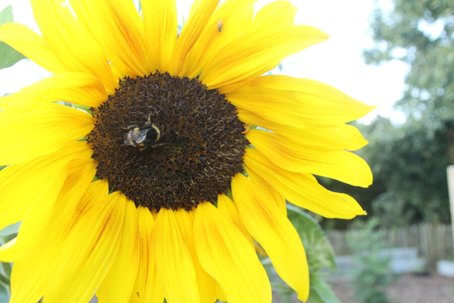 The Place To BEE ...... Ecological garden with beautiful sunset #14