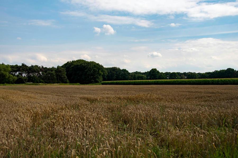 Cosy fieldview near GR5 #4