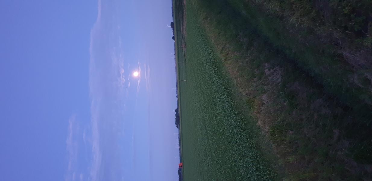 Enjoy the sunset on our farmyard! #4